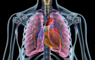 Сердце и легкие: какая связь?